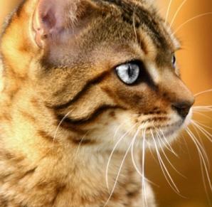 gbr kucing